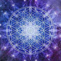 รูปโปรไฟล์ของ Fin Avatar
