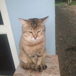 รูปโปรไฟล์ของ cat dog slave