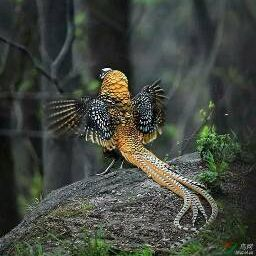 รูปโปรไฟล์ของ pheasant5