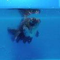 รูปโปรไฟล์ของ ขายปลาทองและปลาสวยงาม