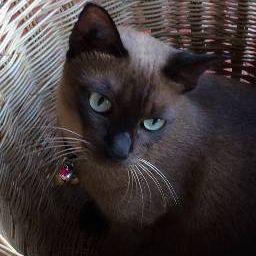 รูปโปรไฟล์ของ catt