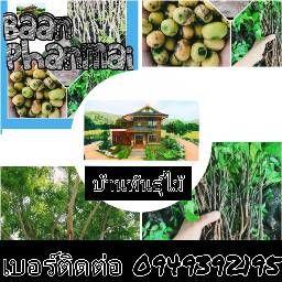 รูปโปรไฟล์ของ Watcharin Nilsuwan