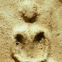 รูปโปรไฟล์ของ chokhnermit