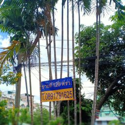 รูปโปรไฟล์ของ Oranuch Saejueng